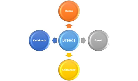 Murgi Palan I Kukut Palan I Poultry Farming Business Plan in Hindi