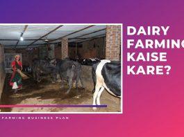 dairy farming in hindi