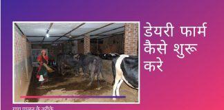 डेयरी-फार्म कैसे शुरू करे गाय पालन की पूरी जानकारी