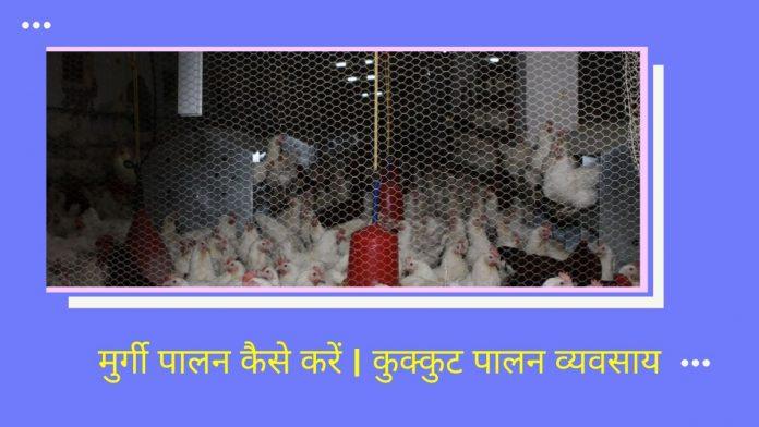 मुर्गी पालन कैसे करें