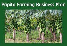 papita farming business plan